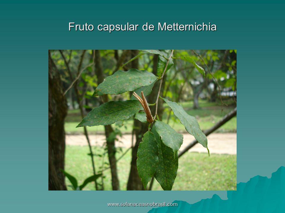 www.solanaceasnobrasil.com Fruto capsular de Metternichia
