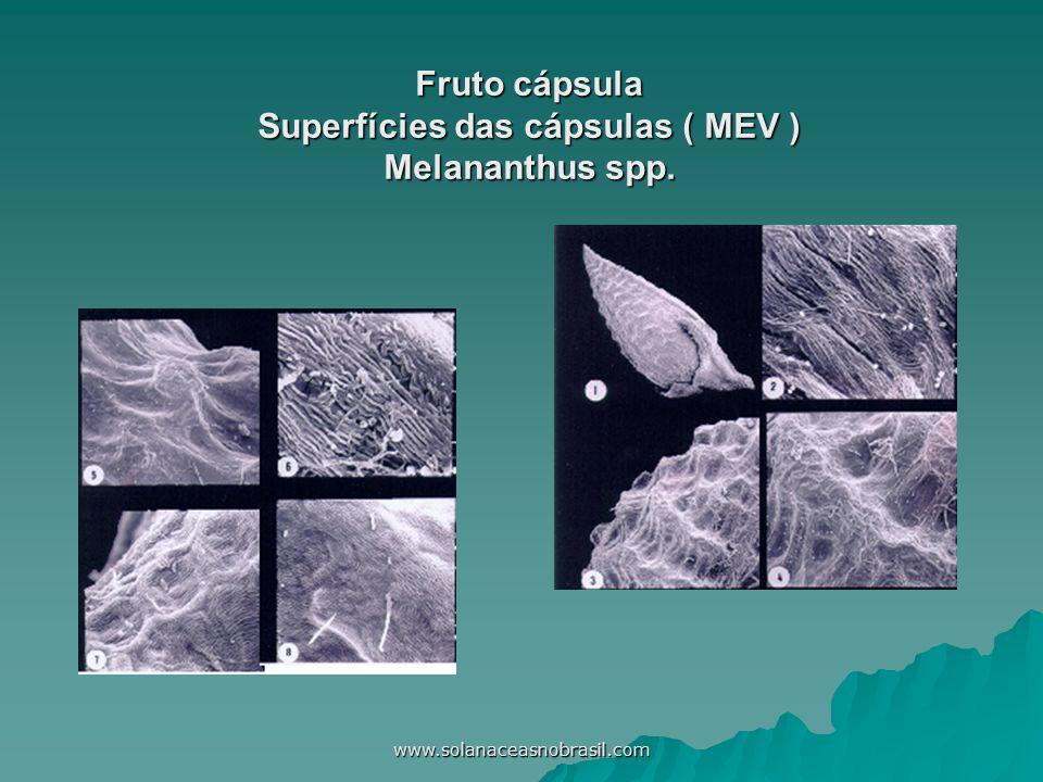 www.solanaceasnobrasil.com Fruto cápsula Superfícies das cápsulas ( MEV ) Melananthus spp.