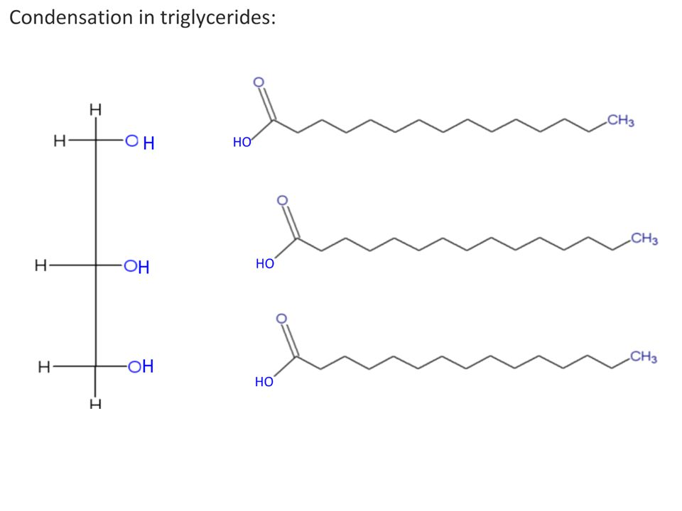 2.3.4 Triglycerides are formed by condensation from three fatty acids and one glycerol.