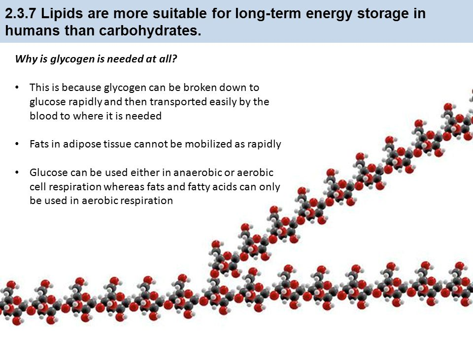 2.3.7 Lipids are more suitable for long-term energy storage in humans than carbohydrates.
