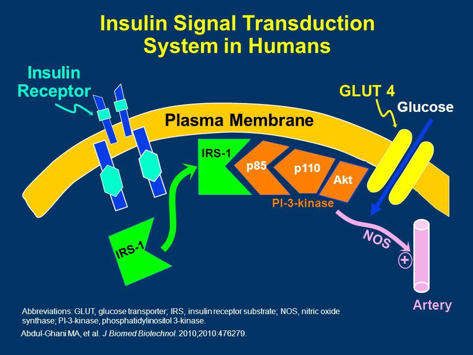 Insulin Receptor Plasma Membrane Insulin Signal Transduction System in Humans Abdul-Ghani MA, et al.