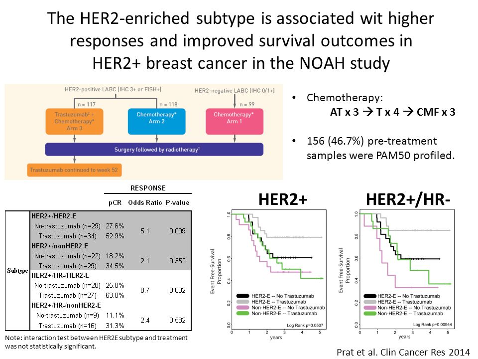 The HER2-enriched subtype is associated wit higher responses and improved survival outcomes in HER2+ breast cancer in the NOAH study Chemotherapy: AT