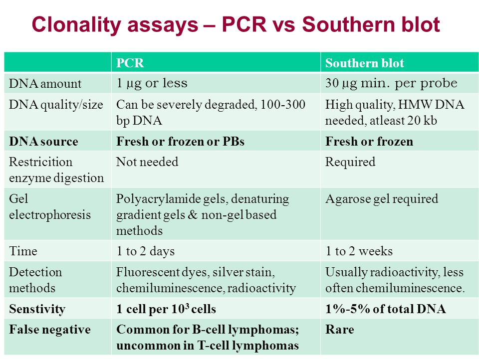 Clonality assays – PCR vs Southern blot PCRSouthern blot DNA amount 1 µg or less 30 µg min. per probe DNA quality/sizeCan be severely degraded, 100-30