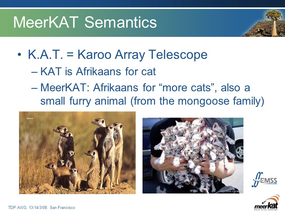 TDP AWG, 13-14/3/08, San Francisco MeerKAT Semantics K.A.T.