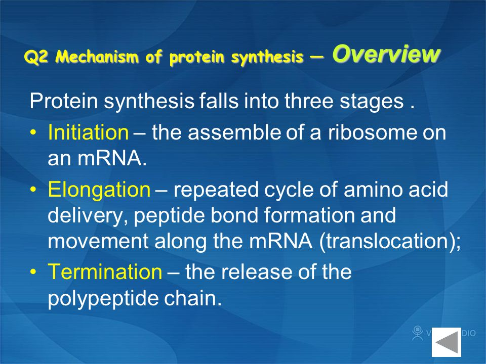 Q2 Mechanism of protein synthesis — Overview Protein synthesis falls into three stages. Initiation – the assemble of a ribosome on an mRNA. Elongation