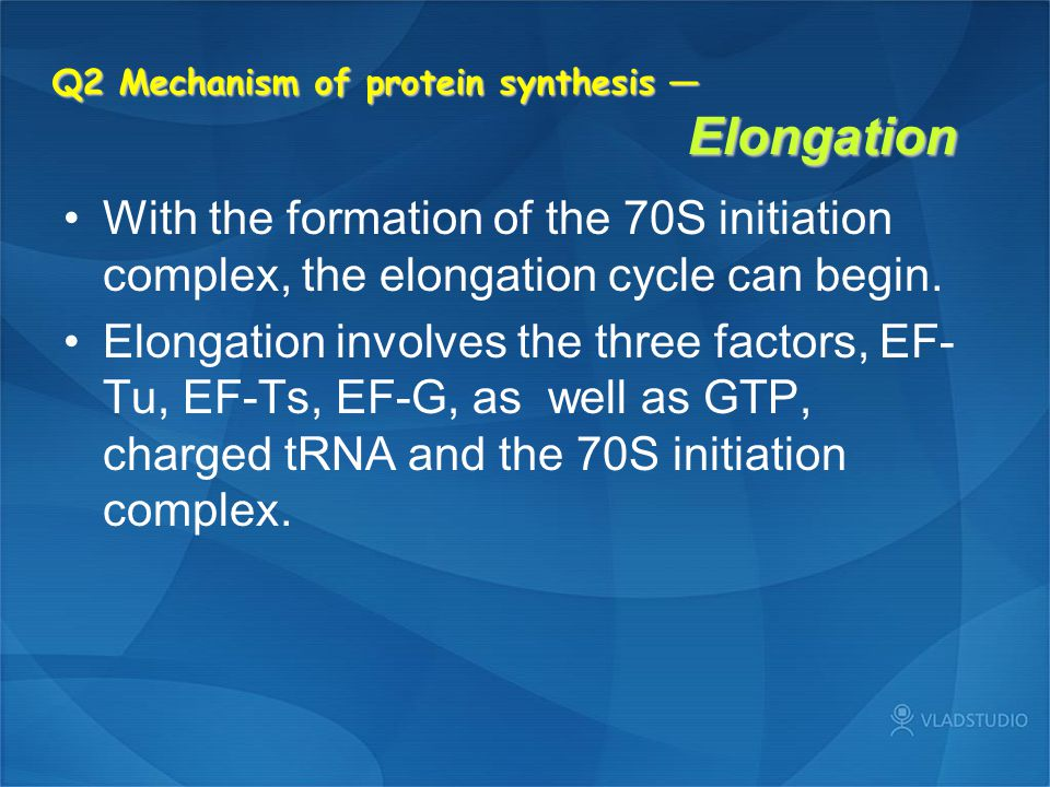Q2 Mechanism of protein synthesis — Elongation With the formation of the 70S initiation complex, the elongation cycle can begin. Elongation involves t