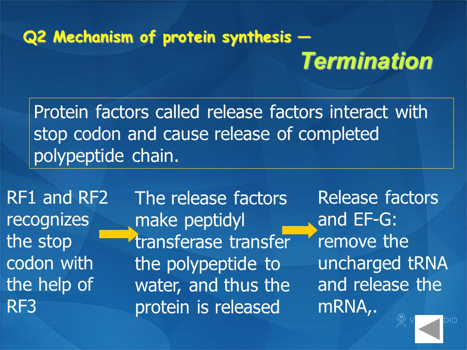 Q2 Mechanism of protein synthesis — Termination Protein factors called release factors interact with stop codon and cause release of completed polypep