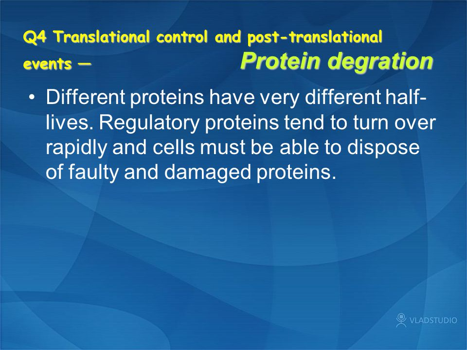 Q4 Translational control and post-translational events — Protein degration Different proteins have very different half- lives. Regulatory proteins ten