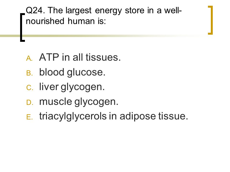 Q24. The largest energy store in a well- nourished human is: A. ATP in all tissues. B. blood glucose. C. liver glycogen. D. muscle glycogen. E. triacy