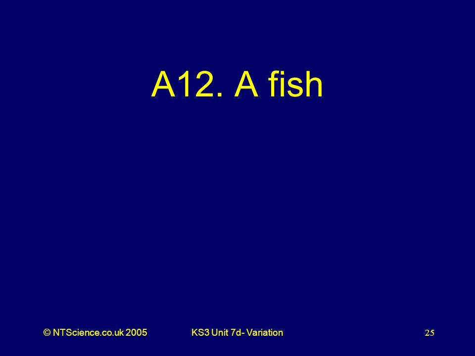 © NTScience.co.uk 2005KS3 Unit 7d- Variation25 A12. A fish