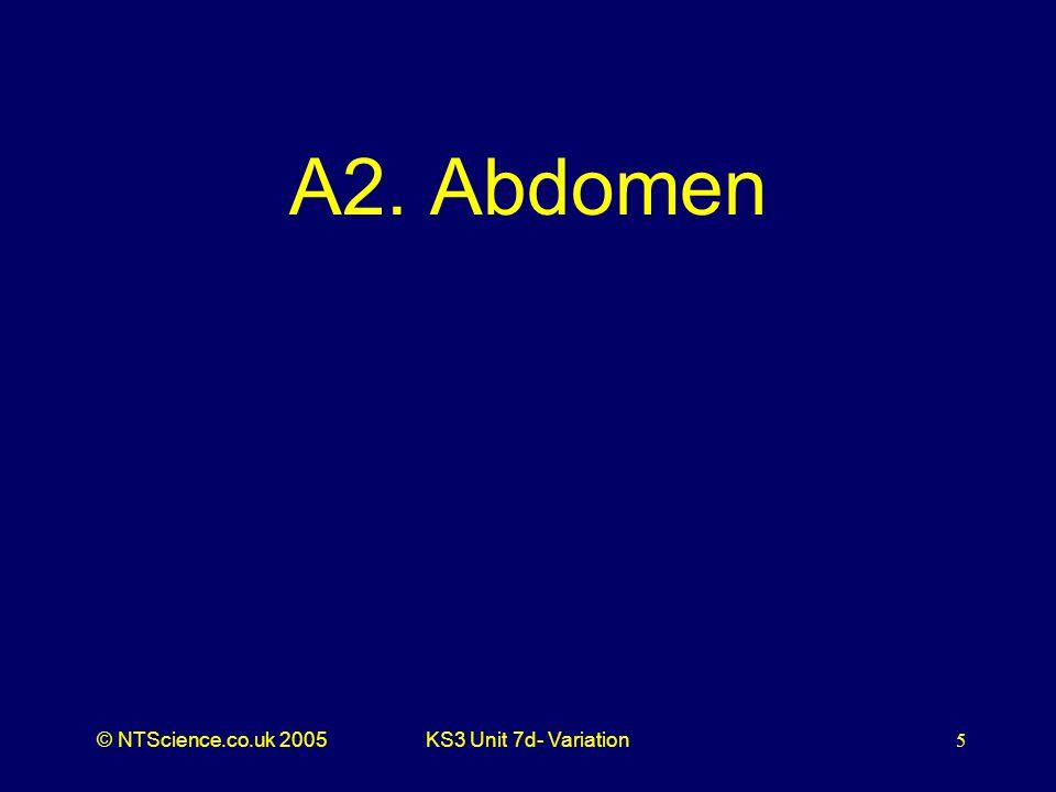 © NTScience.co.uk 2005KS3 Unit 7d- Variation5 A2. Abdomen