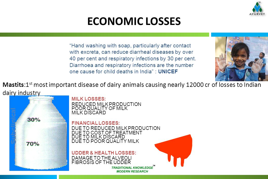 ECONOMIC LOSSES MILK LOSSES: REDUCED MILK PRODUCTION POOR QUALITY OF MILK MILK DISCARD FINANCIAL LOSSES: DUE TO REDUCED MILK PRODUCTION DUE TO COST OF TREATMENT DUE TO MILK DISCARD DUE TO POOR QUALITY MILK UDDER & HEALTH LOSSES: DAMAGE TO THE ALVEOLI FIBROSIS OF THE UDDER Subclinical Mastits:1 st most important disease of dairy animals causing nearly cr of losses to Indian dairy industry Hand washing with soap, particularly after contact with excreta, can reduce diarrheal diseases by over 40 per cent and respiratory infections by 30 per cent.
