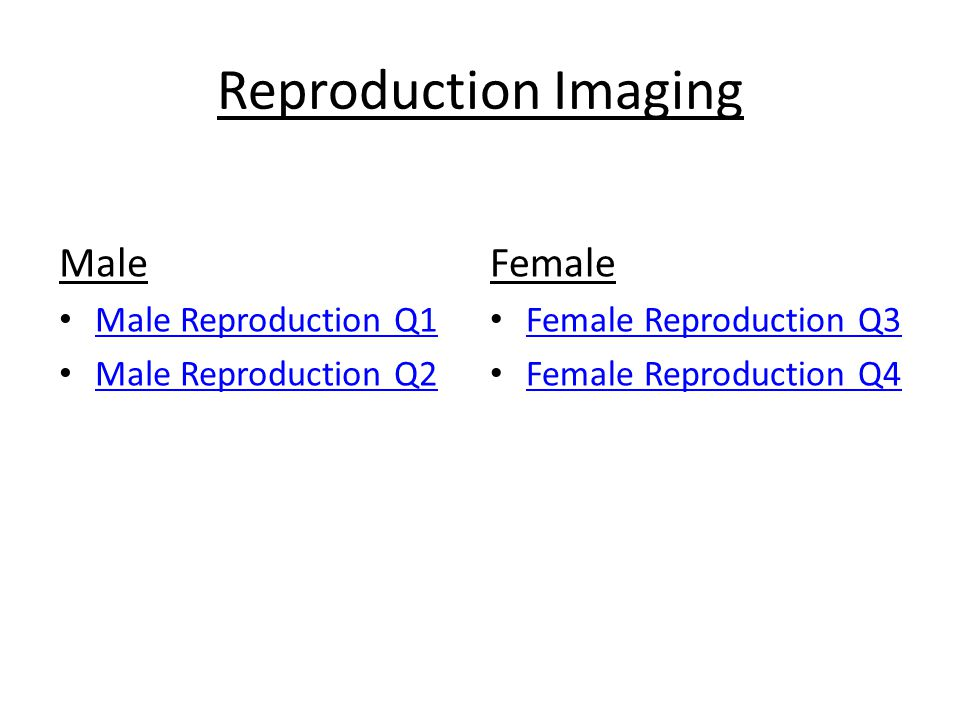 Reproduction Imaging Male Male Reproduction Q1 Male Reproduction Q2 Female Female Reproduction Q3 Female Reproduction Q4