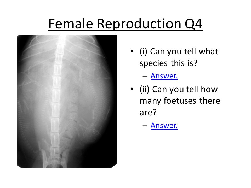 Female Reproduction Q4 (i) Can you tell what species this is.
