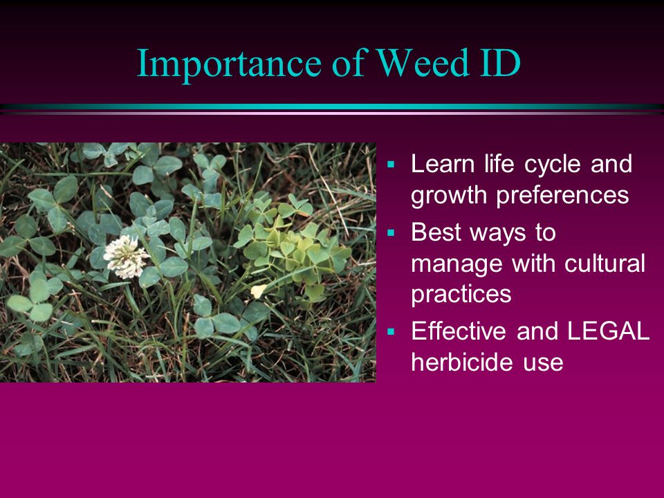 Importance of Weed ID  Learn life cycle and growth preferences  Best ways to manage with cultural practices  Effective and LEGAL herbicide use