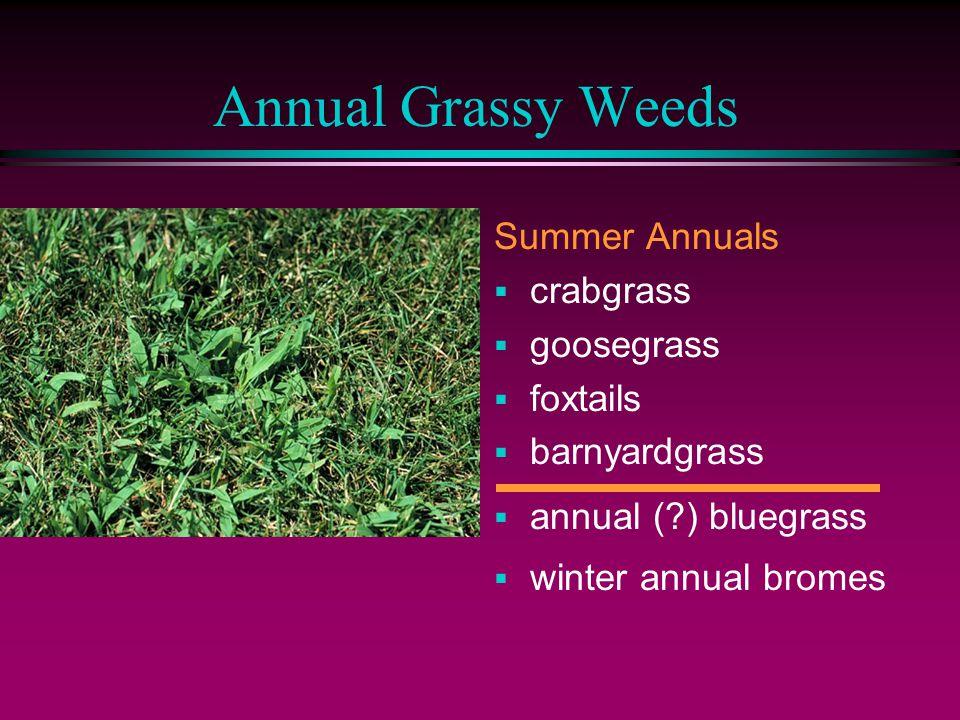Annual Grassy Weeds Summer Annuals  crabgrass  goosegrass  foxtails  barnyardgrass  annual ( ) bluegrass  winter annual bromes