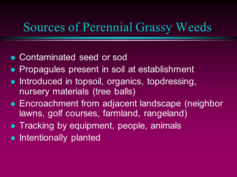 Sources of Perennial Grassy Weeds l Contaminated seed or sod l Propagules present in soil at establishment l Introduced in topsoil, organics, topdress