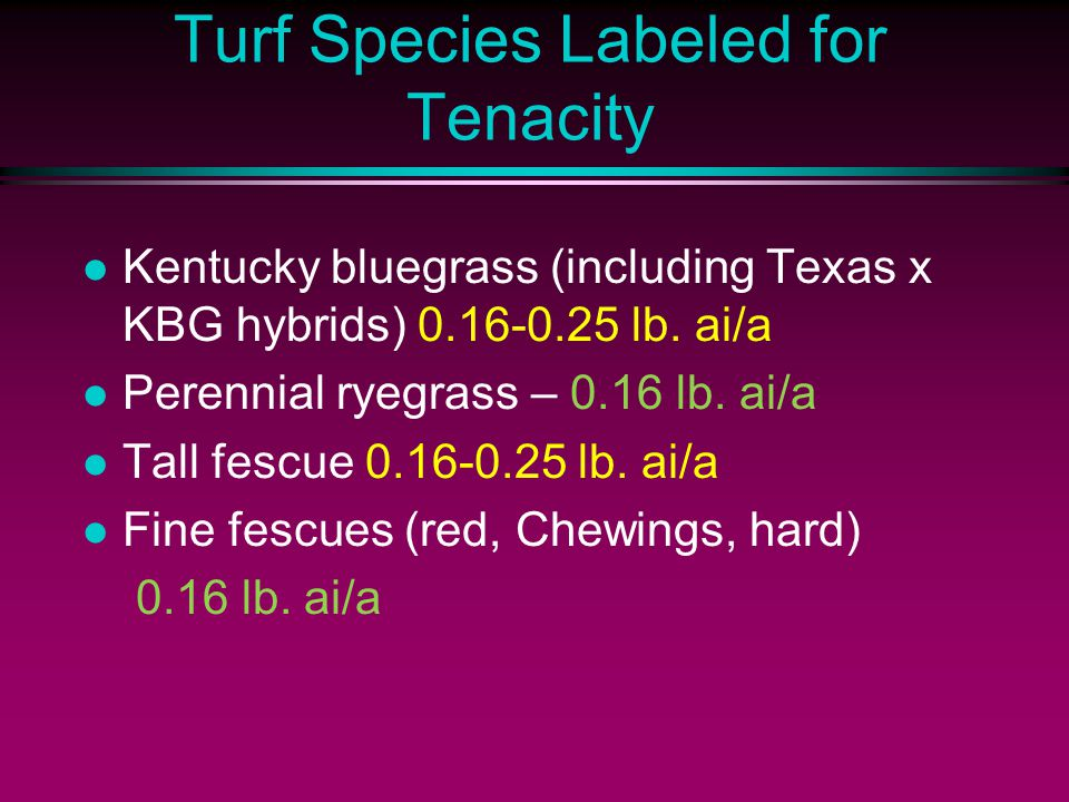 Turf Species Labeled for Tenacity l Kentucky bluegrass (including Texas x KBG hybrids) 0.16-0.25 lb. ai/a l Perennial ryegrass – 0.16 lb. ai/a l Tall