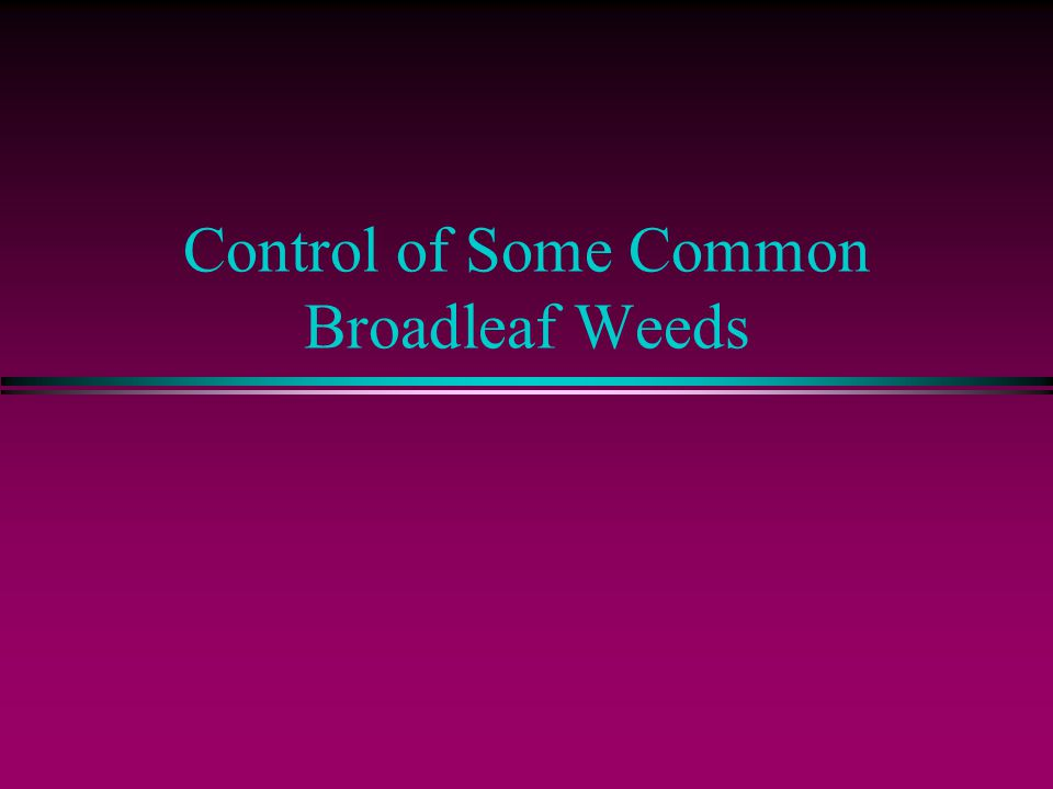 Control of Some Common Broadleaf Weeds
