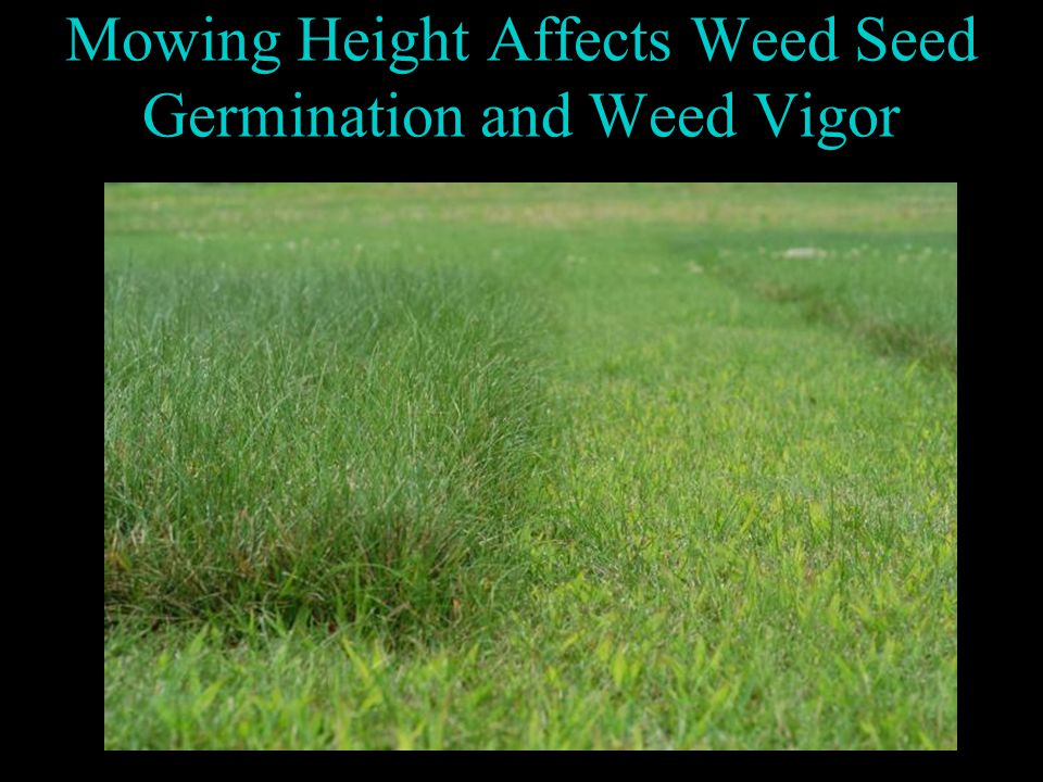 Mowing Height Affects Weed Seed Germination and Weed Vigor
