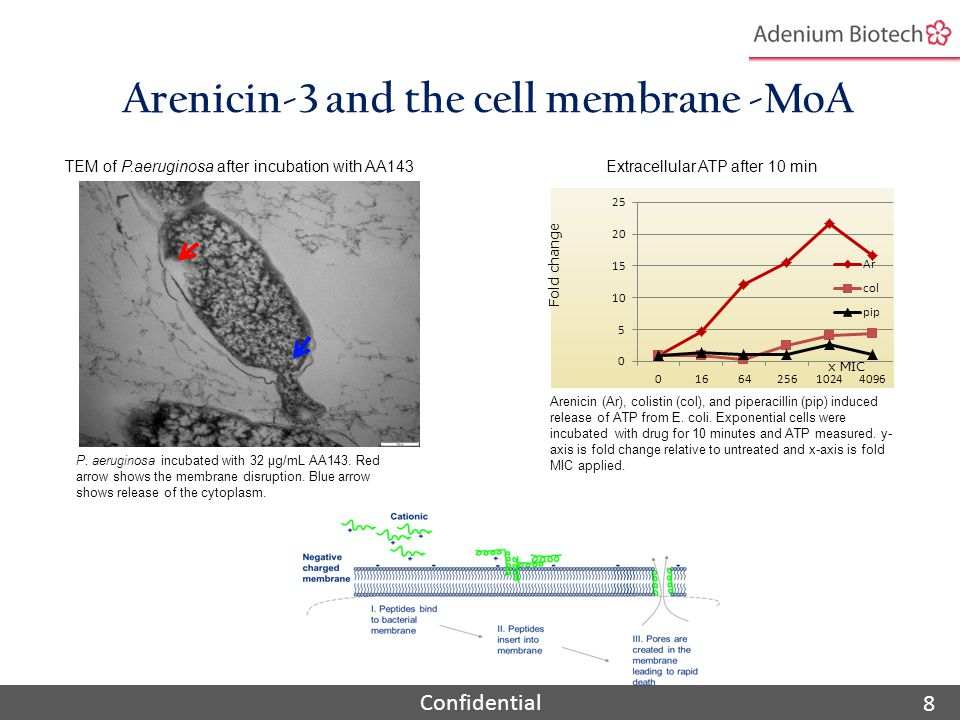 Confidential Arenicin is selective and specific for bacteria with low hemolytic and cytotoxic activity 9 wt