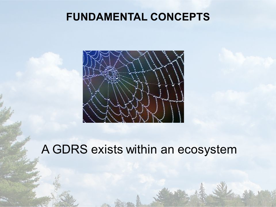 FUNDAMENTAL CONCEPTS A GDRS exists within an ecosystem