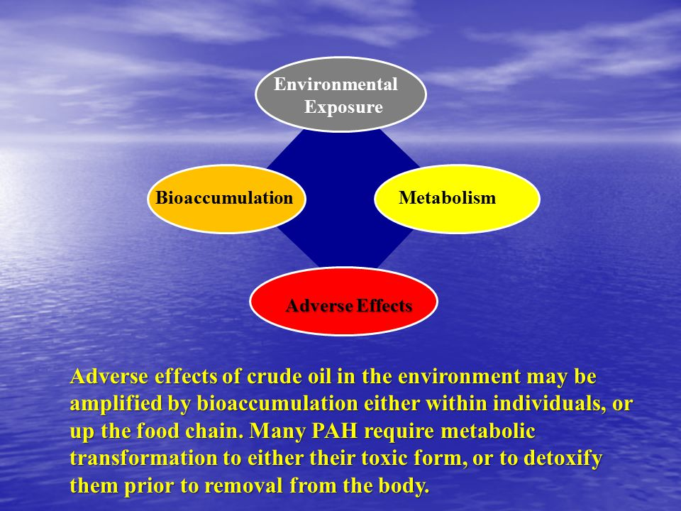 Environmental Exposure BioaccumulationMetabolism Adverse Effects Adverse effects of crude oil in the environment may be amplified by bioaccumulation either within individuals, or up the food chain.