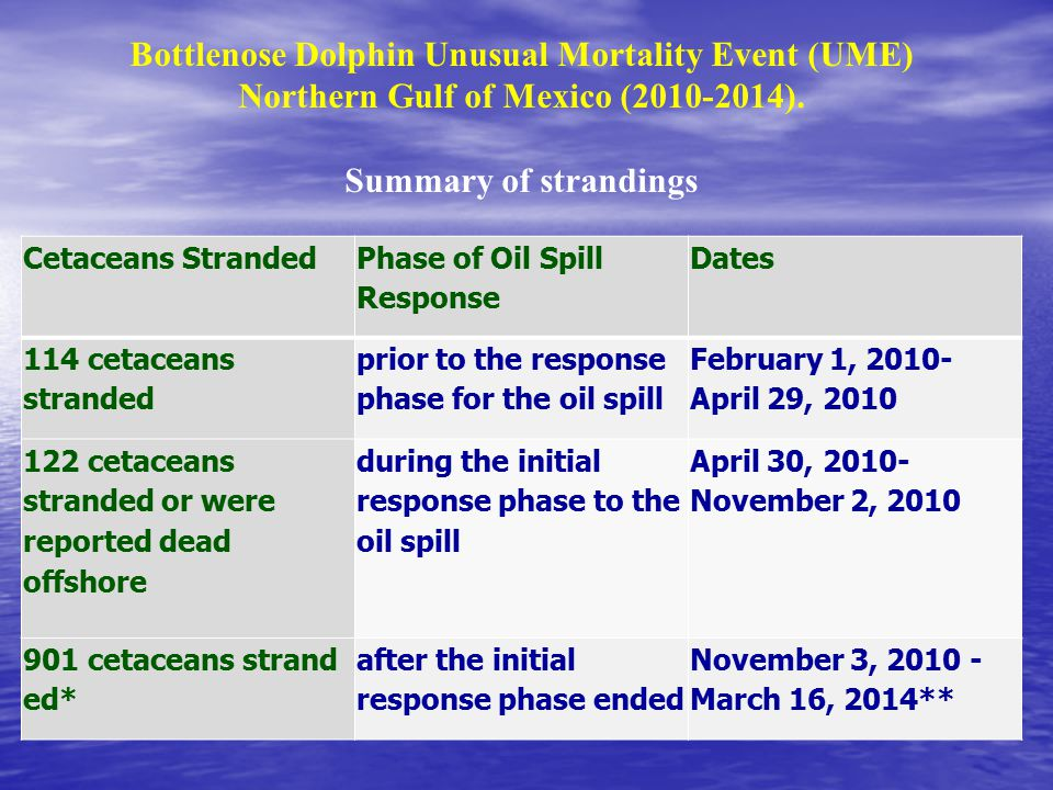 Cetaceans Stranded Phase of Oil Spill Response Dates 114 cetaceans stranded prior to the response phase for the oil spill February 1, 2010- April 29, 2010 122 cetaceans stranded or were reported dead offshore during the initial response phase to the oil spill April 30, 2010- November 2, 2010 901 cetaceans strand ed* after the initial response phase ended November 3, 2010 - March 16, 2014** Bottlenose Dolphin Unusual Mortality Event (UME) Northern Gulf of Mexico (2010-2014).