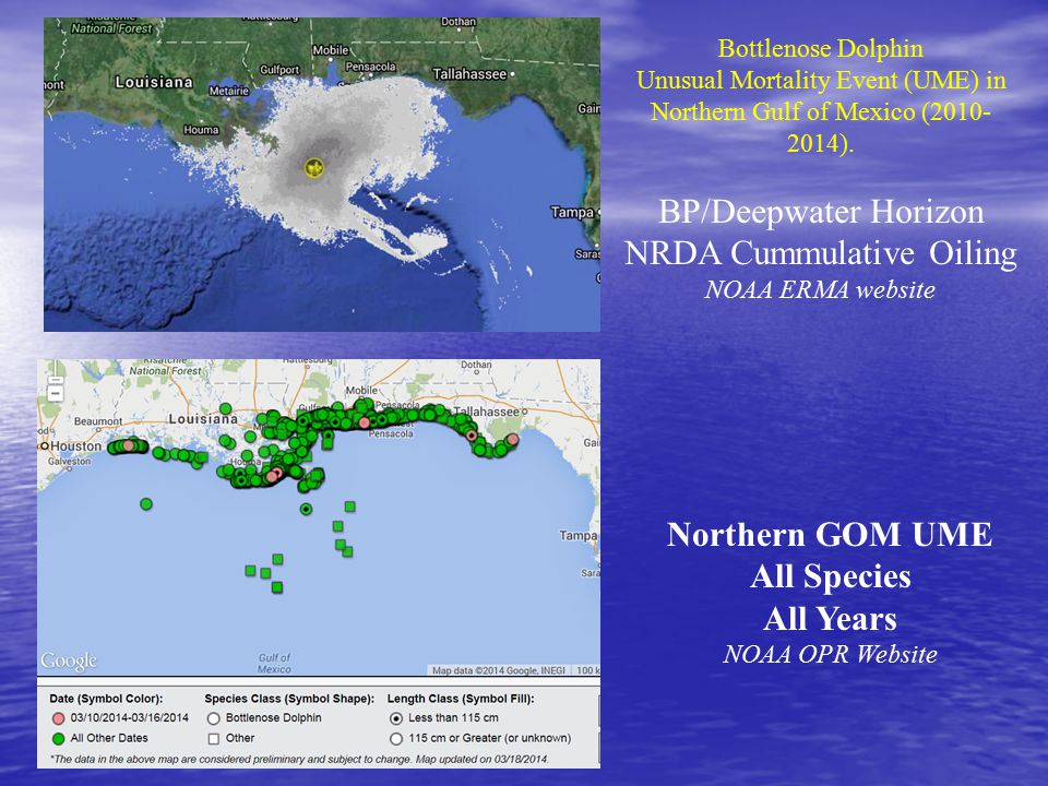 Bottlenose Dolphin Unusual Mortality Event (UME) in Northern Gulf of Mexico (2010- 2014). BP/Deepwater Horizon NRDA Cummulative Oiling NOAA ERMA websi