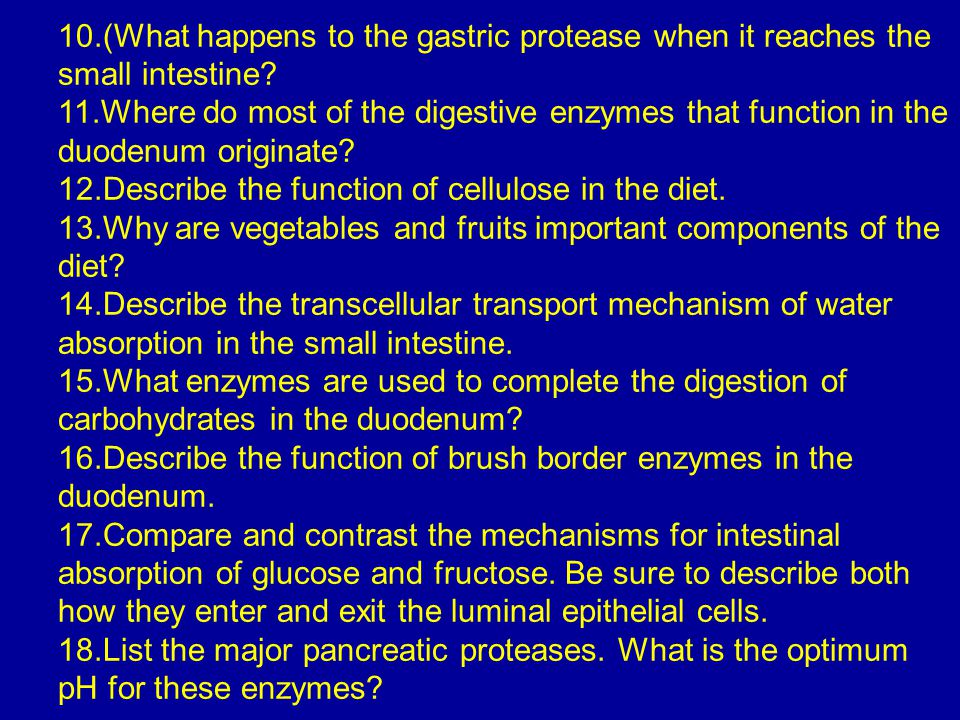 10.(What happens to the gastric protease when it reaches the small intestine? 11.Where do most of the digestive enzymes that function in the duodenum