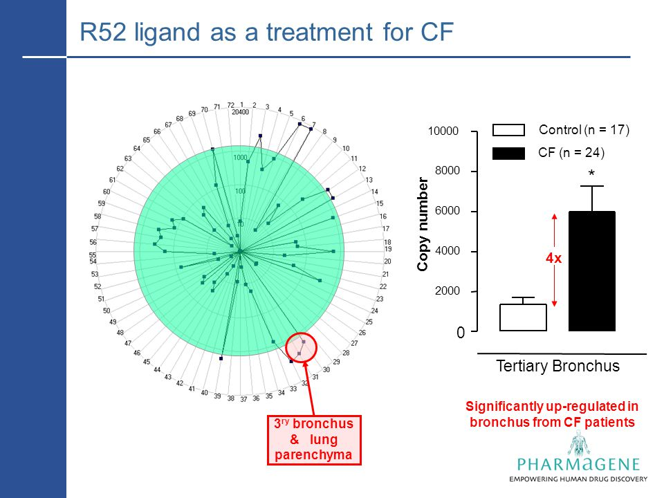 Tertiary Bronchus 0 2000 4000 6000 8000 10000 CF (n = 24) Control (n = 17) Copy number * 4x 3 ry bronchus & lung parenchyma R52 ligand as a treatment for CF Significantly up-regulated in bronchus from CF patients