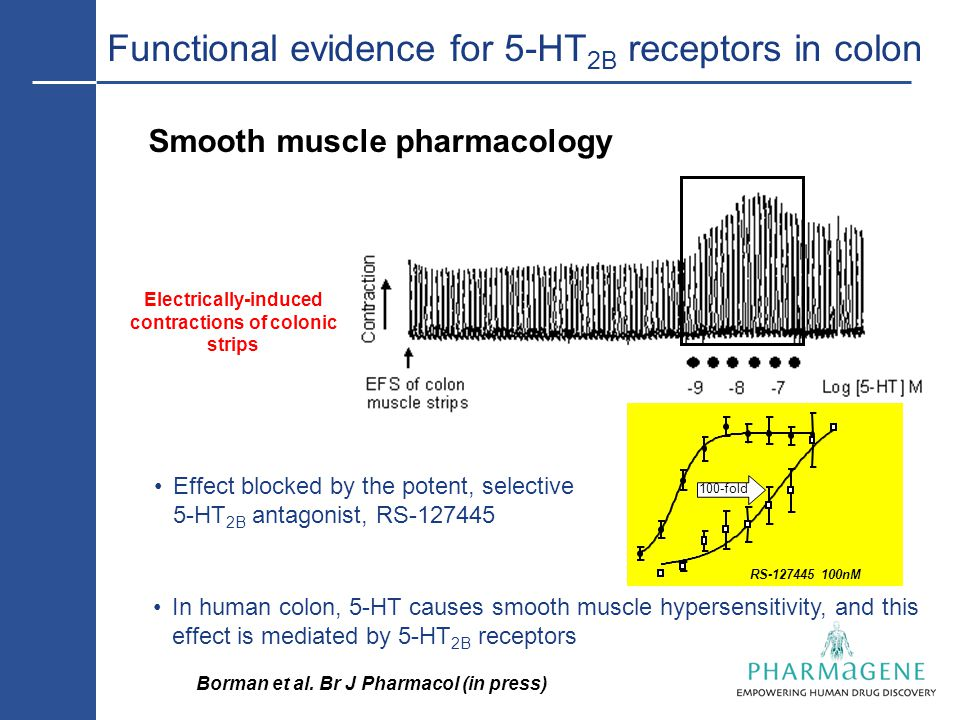 Functional evidence for 5-HT 2B receptors in colon Smooth muscle pharmacology Effect blocked by the potent, selective 5-HT 2B antagonist, RS-127445 RS-127445 100nM Electrically-induced contractions of colonic strips In human colon, 5-HT causes smooth muscle hypersensitivity, and this effect is mediated by 5-HT 2B receptors 100-fold Borman et al.