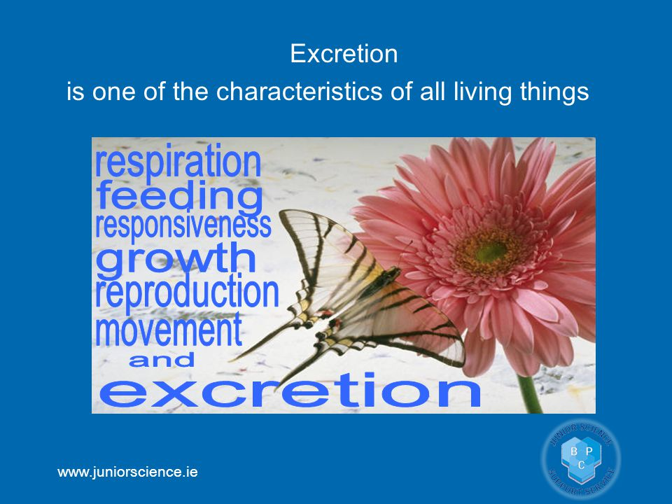 www.juniorscience.ie Excretion is one of the characteristics of all living things