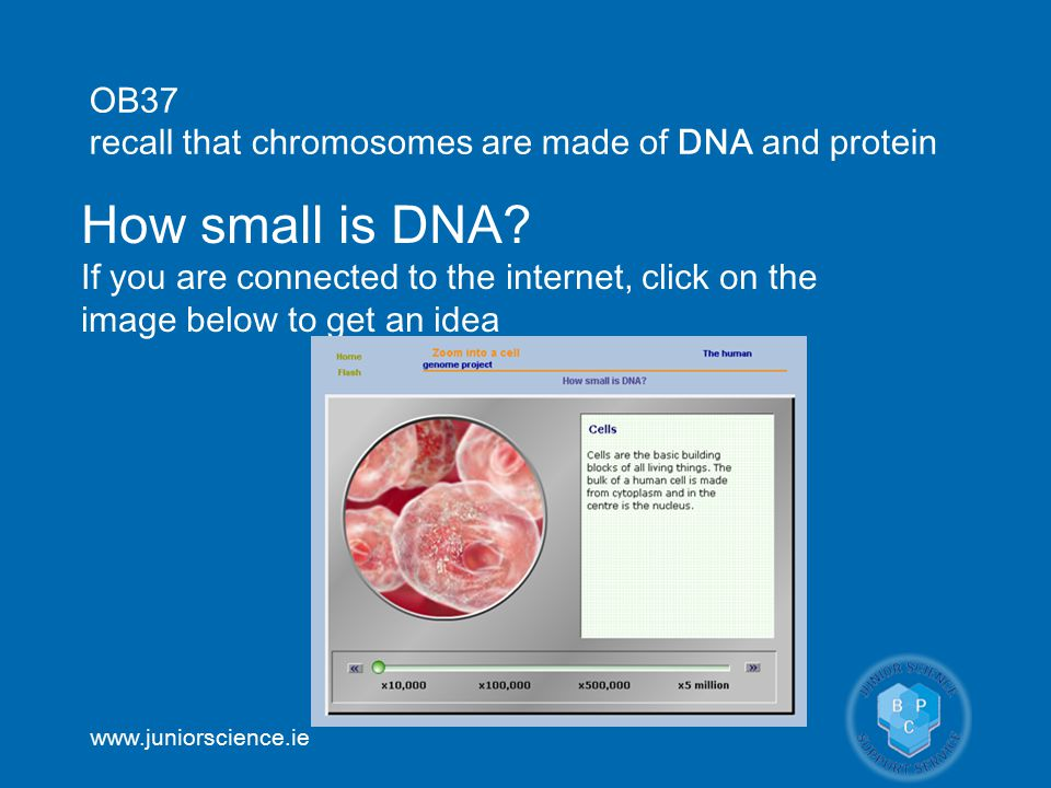 www.juniorscience.ie How small is DNA.