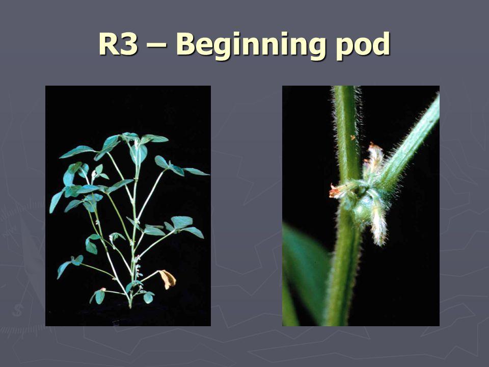 R3 – Beginning pod