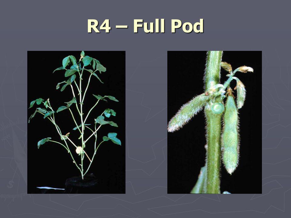 R4 – Full Pod
