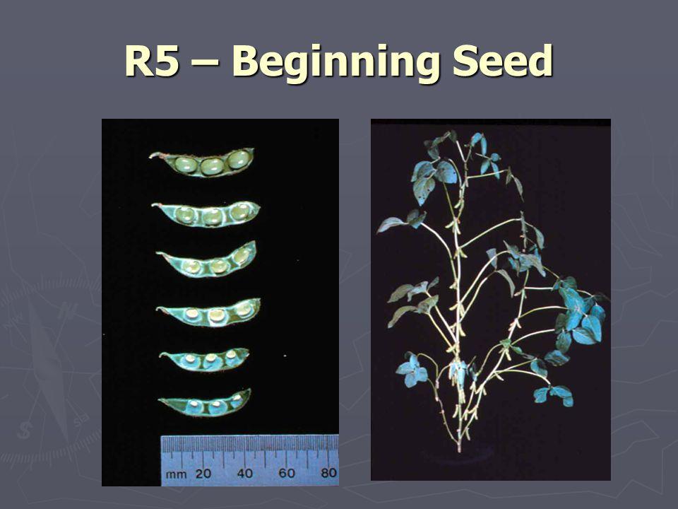 R5 – Beginning Seed