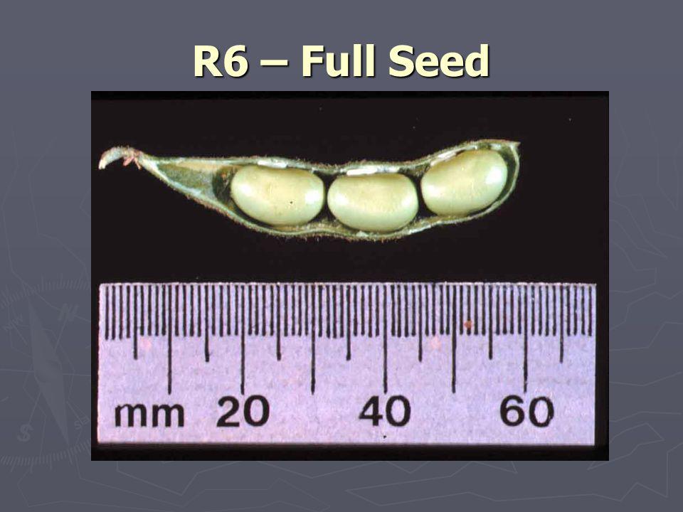 R6 – Full Seed