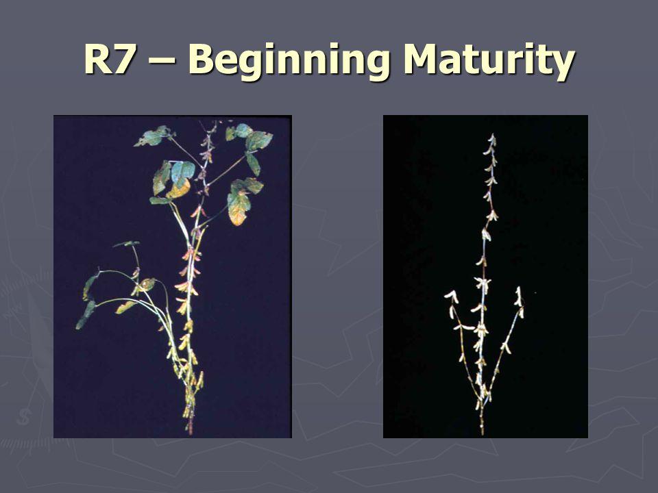 R7 – Beginning Maturity