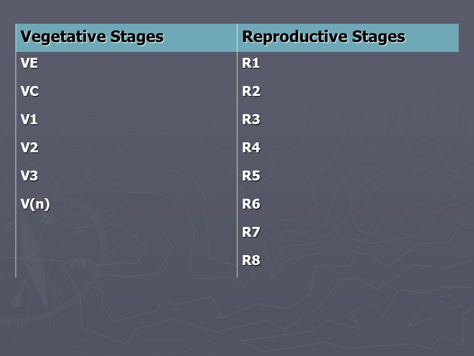Vegetative Stages Reproductive Stages VE – emergence R1 – beginning bloom VC – cotyledon R2 – full bloom V1 – 1 st node R3 – beginning pod V2 – 2 nd node R4 – full pod V3 – 3 rd node R5 – beginning seed V(n) – n th node R6 – full seed R7 – beginning maturity R8 – full maturity