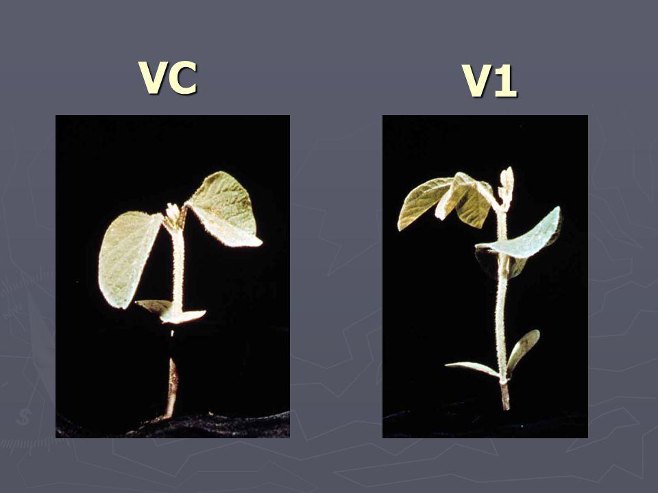 VC V1