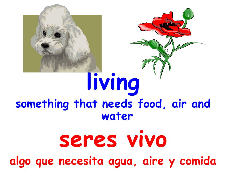 living something that needs food, air and water seres vivo algo que necesita agua, aire y comida