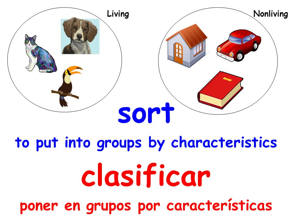 sort to put into groups by characteristics clasificar poner en grupos por características Living Nonliving