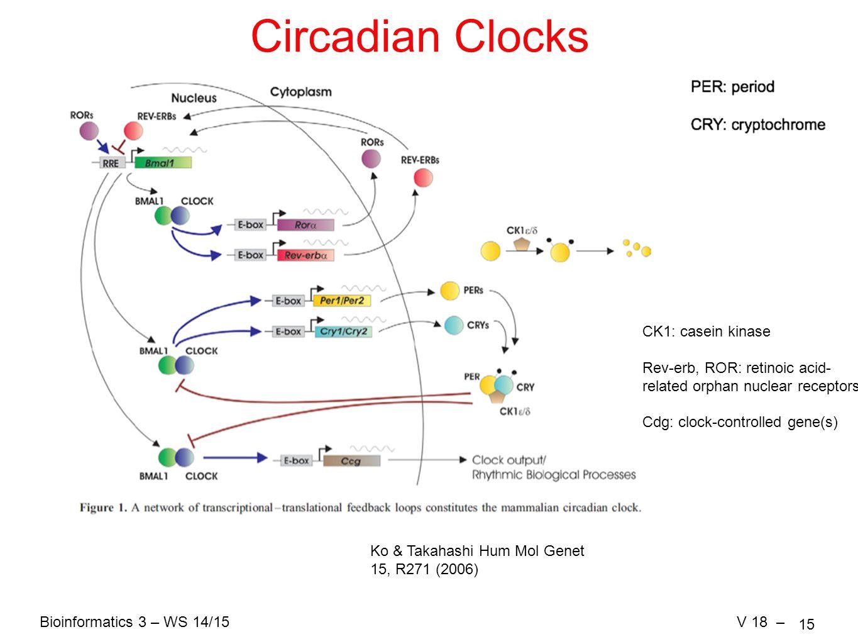 Bioinformatics 3 – WS 14/15V 18 – 15 Circadian Clocks Ko & Takahashi Hum Mol Genet 15, R271 (2006) CK1: casein kinase Rev-erb, ROR: retinoic acid- rel