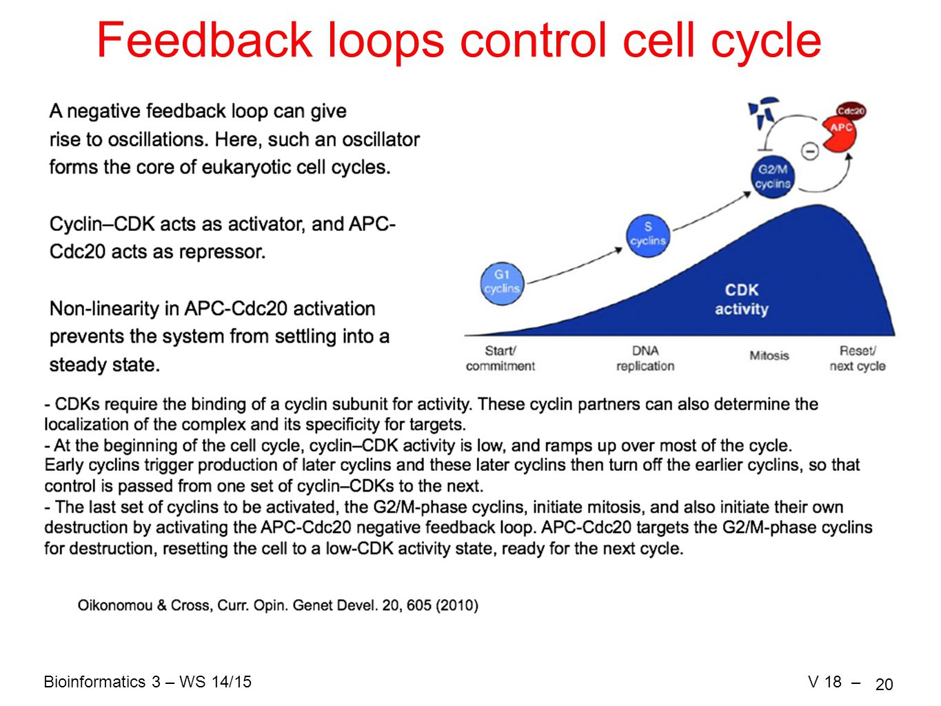 Bioinformatics 3 – WS 14/15V 18 – 20 Feedback loops control cell cycle