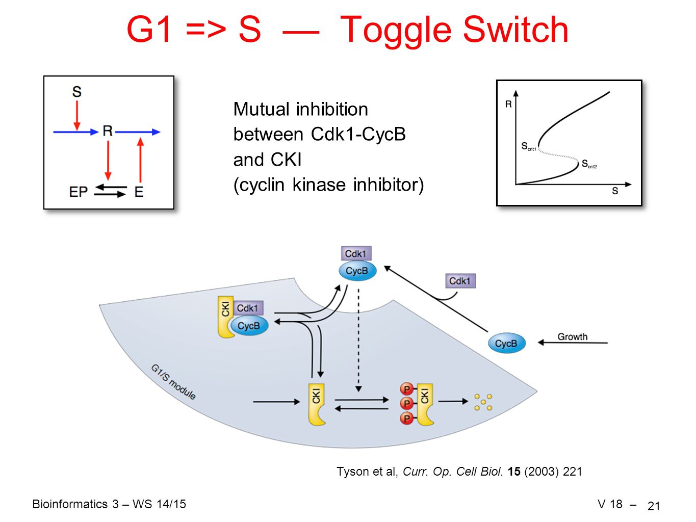 Bioinformatics 3 – WS 14/15V 18 – 21 G1 => S — Toggle Switch Mutual inhibition between Cdk1-CycB and CKI (cyclin kinase inhibitor) Tyson et al, Curr.