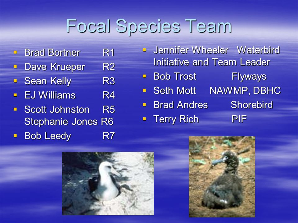 Focal Species Team  Brad BortnerR1  Dave Krueper R2  Sean Kelly R3  EJ Williams R4  Scott Johnston R5 Stephanie Jones R6  Bob LeedyR7  Jennifer Wheeler Waterbird Initiative and Team Leader  Bob Trost Flyways  Seth Mott NAWMP, DBHC  Brad Andres Shorebird  Terry Rich PIF