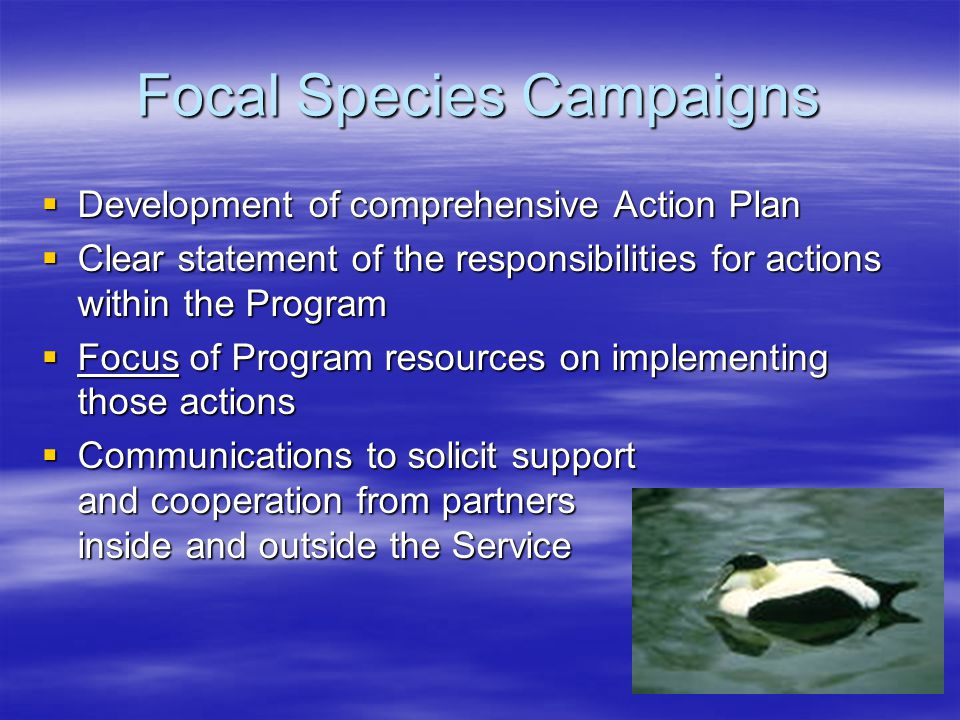 Focal Species Campaigns  Development of comprehensive Action Plan  Clear statement of the responsibilities for actions within the Program  Focus of Program resources on implementing those actions  Communications to solicit support and cooperation from partners inside and outside the Service