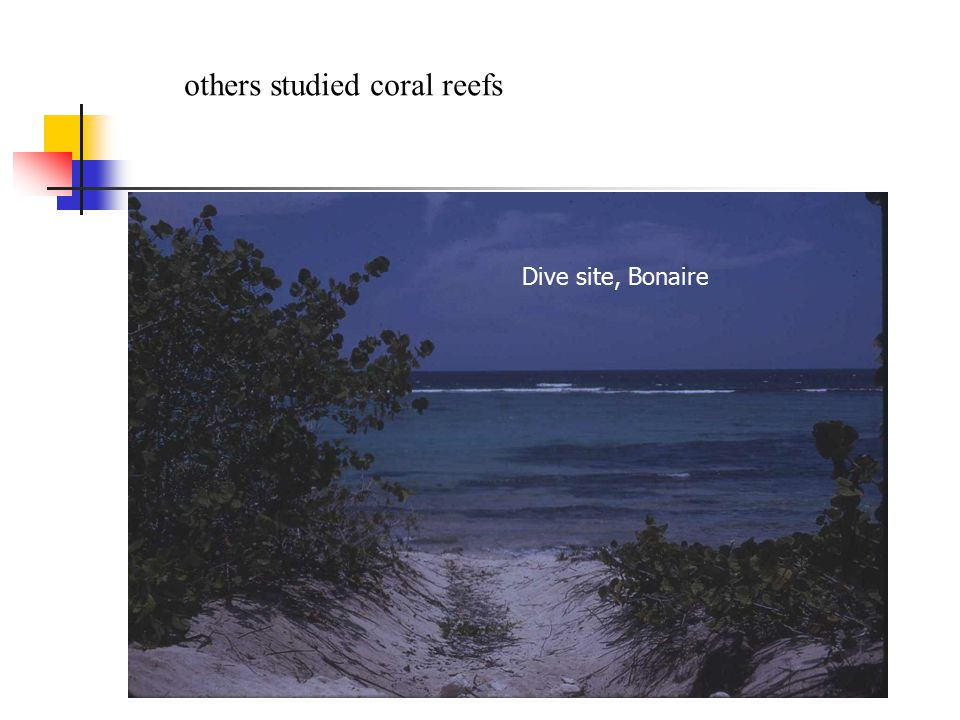 others studied coral reefs Dive site, Bonaire
