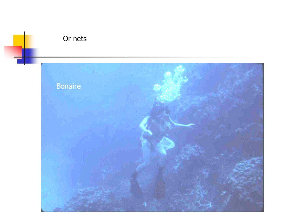 Or nets Bonaire